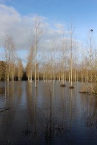 crue de la Loire 2021